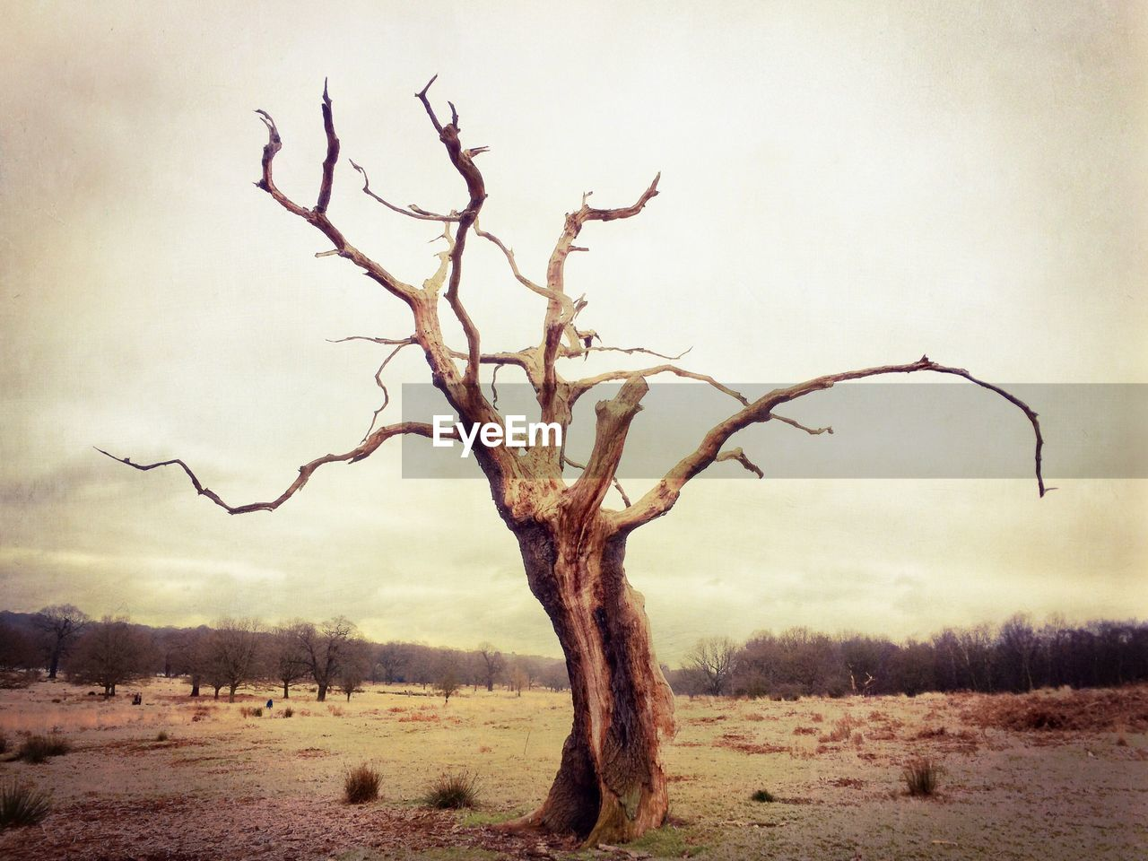 View of bare tree in field against cloudy sky