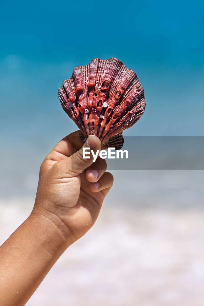 Close-Up Of Hand Holding Seashell Against Sky