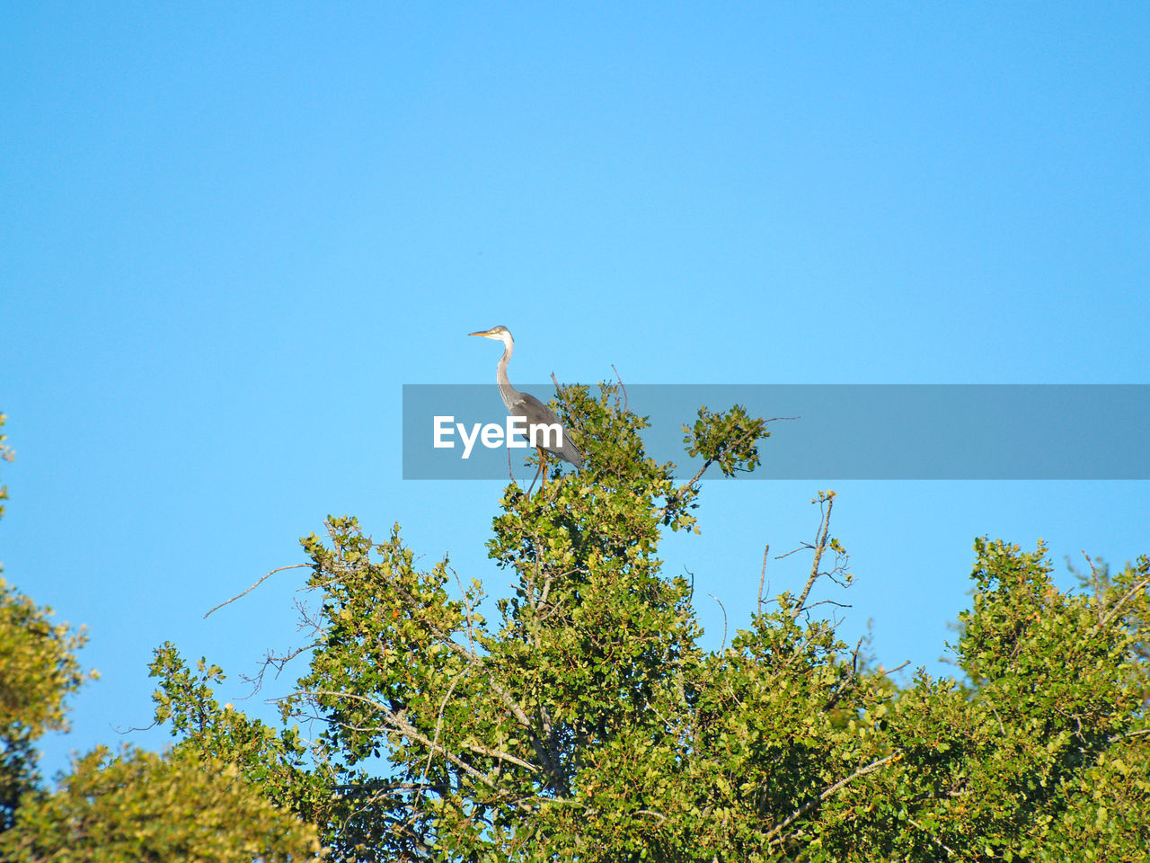 plant, tree, low angle view, sky, clear sky, animals in the wild, bird, growth, nature, green color, animal wildlife, day, vertebrate, no people, animal, animal themes, blue, outdoors, copy space, perching