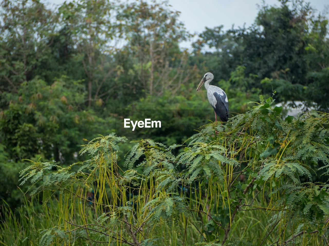 Bird perching on a forest
