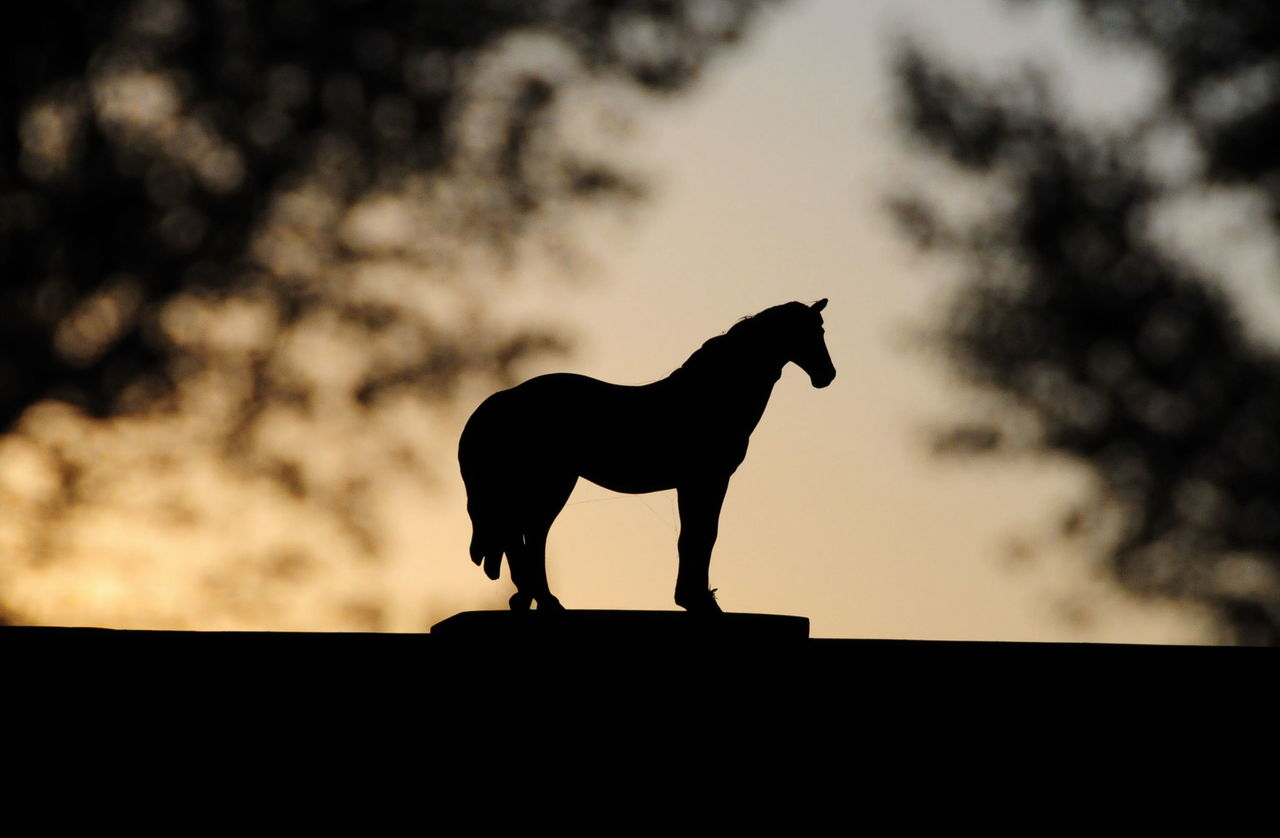 silhouette, animal, animal themes, mammal, domestic animals, sky, one animal, domestic, vertebrate, nature, livestock, sunset, animal wildlife, pets, standing, no people, cloud - sky, side view, outdoors, low angle view, herbivorous