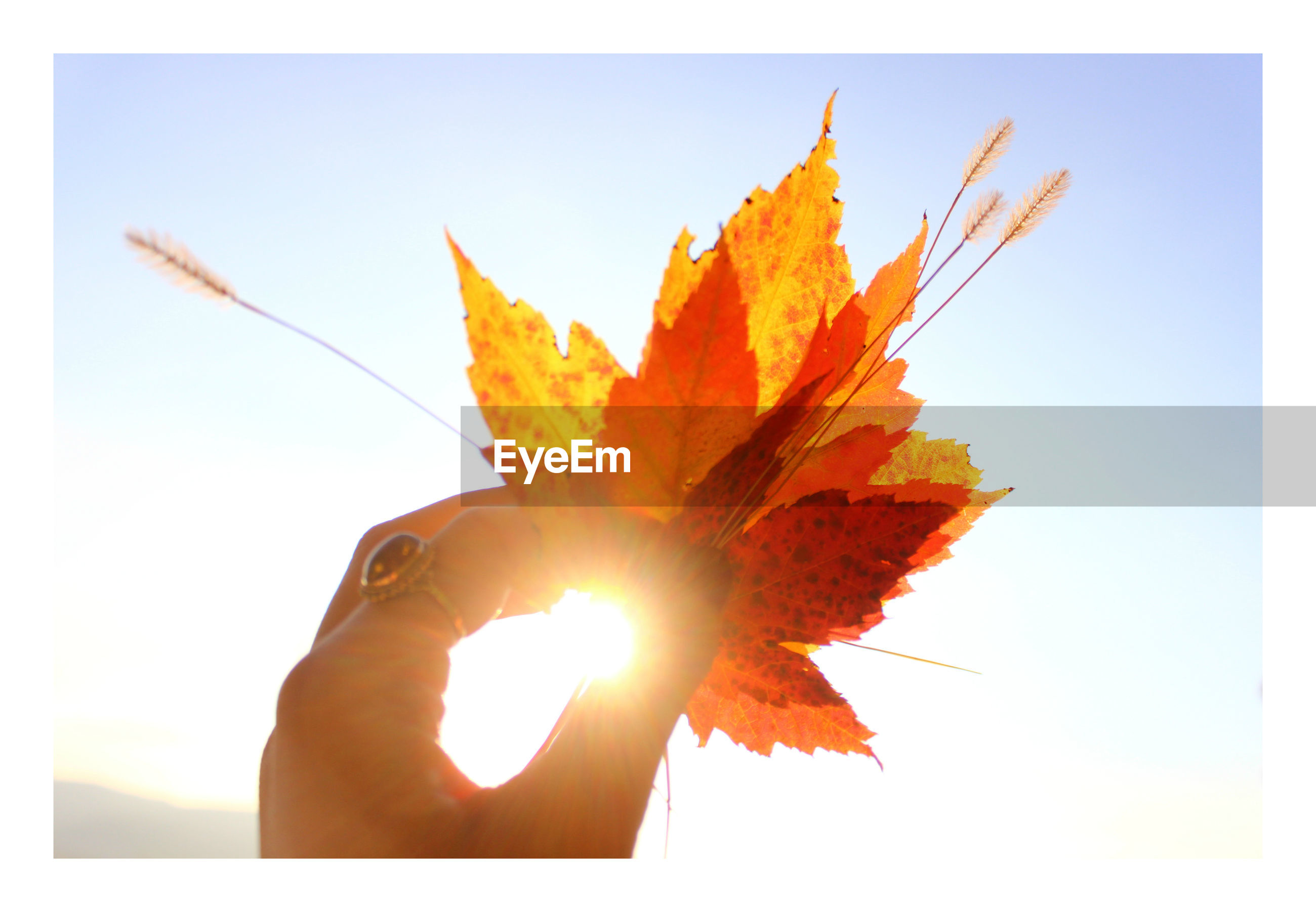 CLOSE-UP OF LEAVES AGAINST SUN