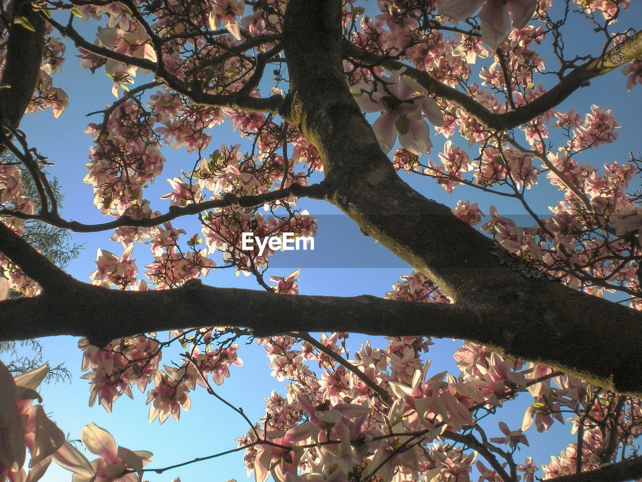 tree, plant, branch, low angle view, beauty in nature, growth, sky, nature, day, flowering plant, no people, outdoors, flower, springtime, blossom, sunlight, leaf, tranquility, plant part, autumn, cherry blossom, cherry tree, spring