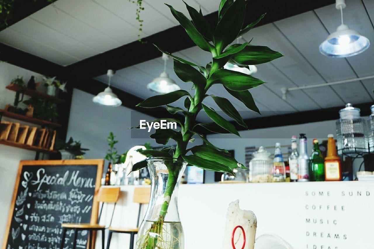 indoors, text, no people, shelf, hanging, blackboard, leaf, home showcase interior, close-up, day, freshness, bookshelf