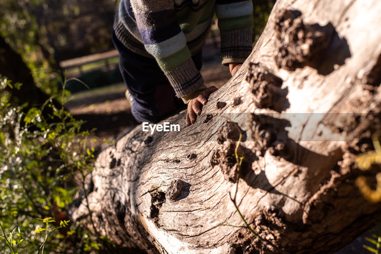one person, wood - material, real people, nature, day, tree, lifestyles, human body part, outdoors, sunlight, tree trunk, leisure activity, land, trunk, plant, focus on foreground, close-up, human hand, selective focus, hand, bark