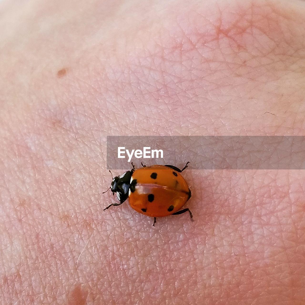Close-Up Of Ladybug On Skin