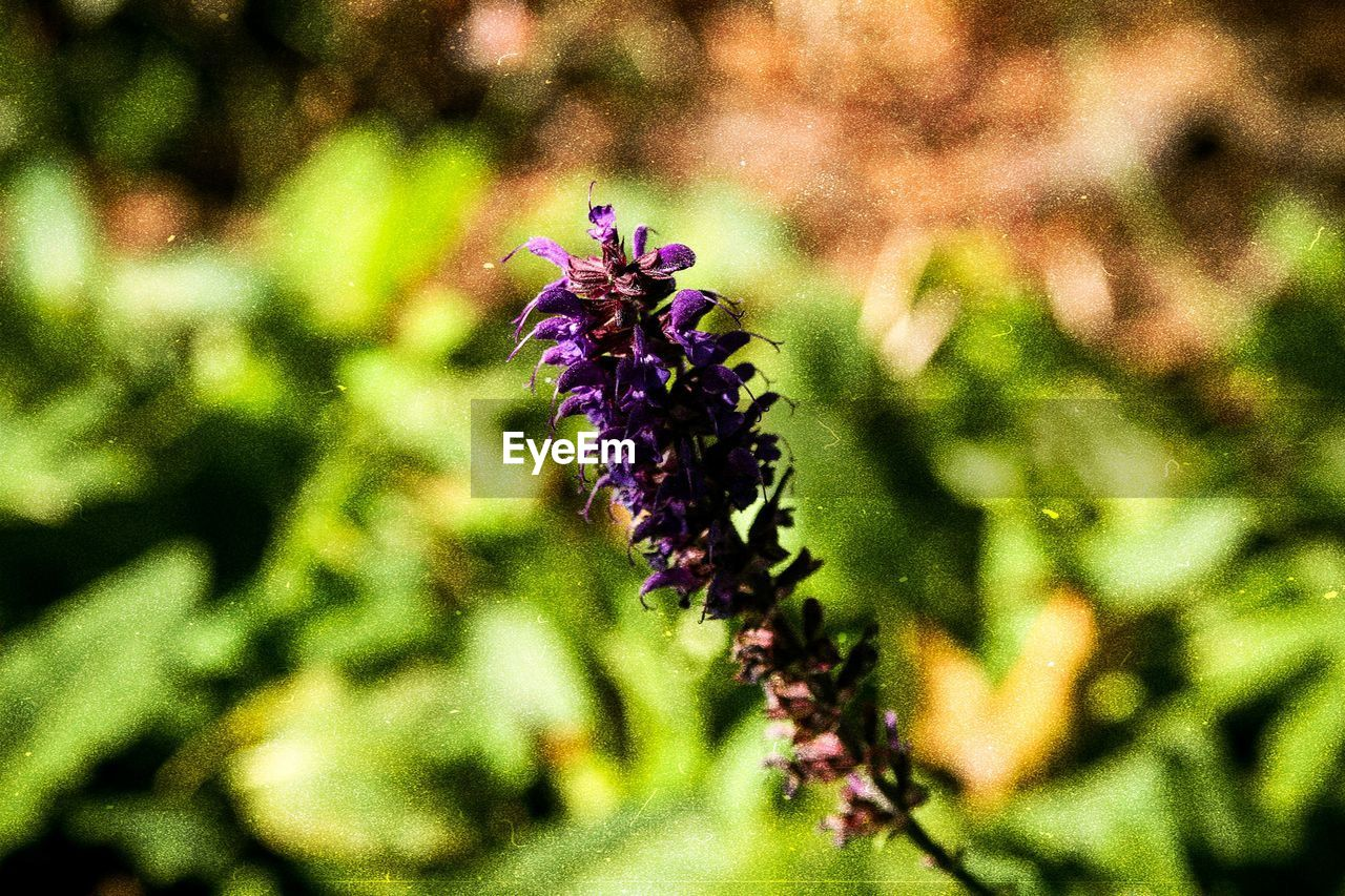flower, flowering plant, plant, beauty in nature, growth, freshness, close-up, vulnerability, fragility, purple, no people, nature, focus on foreground, day, selective focus, flower head, inflorescence, animals in the wild, petal, animal themes, outdoors
