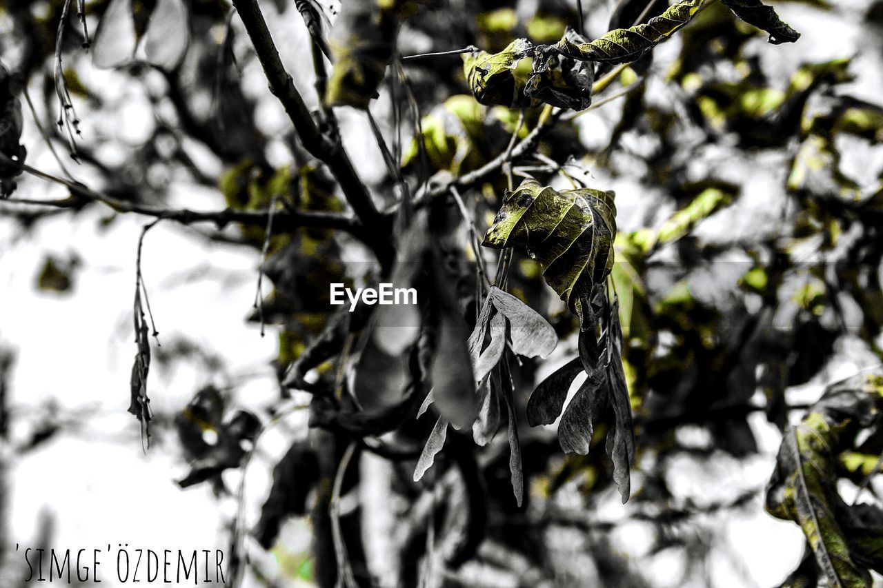 plant, no people, tree, close-up, focus on foreground, growth, day, nature, leaf, plant part, branch, selective focus, beauty in nature, outdoors, food, fruit, green color, cold temperature, tranquility, healthy eating, leaves