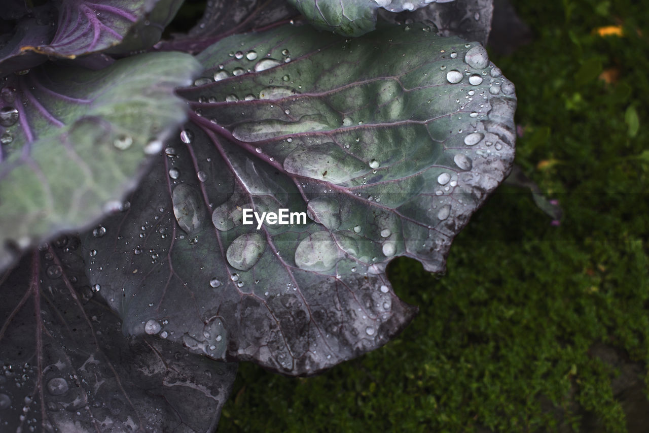 water, drop, plant, close-up, wet, growth, beauty in nature, leaf, nature, plant part, no people, day, freshness, outdoors, green color, raindrop, high angle view, fragility, purple, rain, dew, purity, leaves