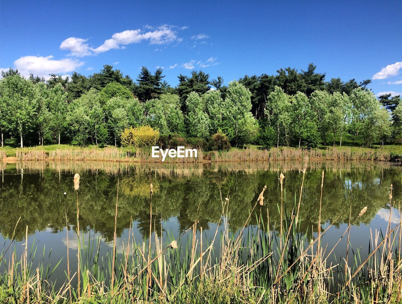 SCENIC VIEW OF LAKE WITH TREES REFLECTION AGAINST SKY