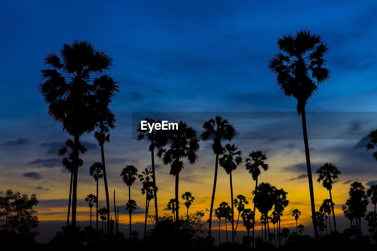 tree, palm tree, sky, beauty in nature, nature, silhouette, sunset, low angle view, cloud - sky, growth, outdoors, scenics, no people, tree trunk, tranquility, day