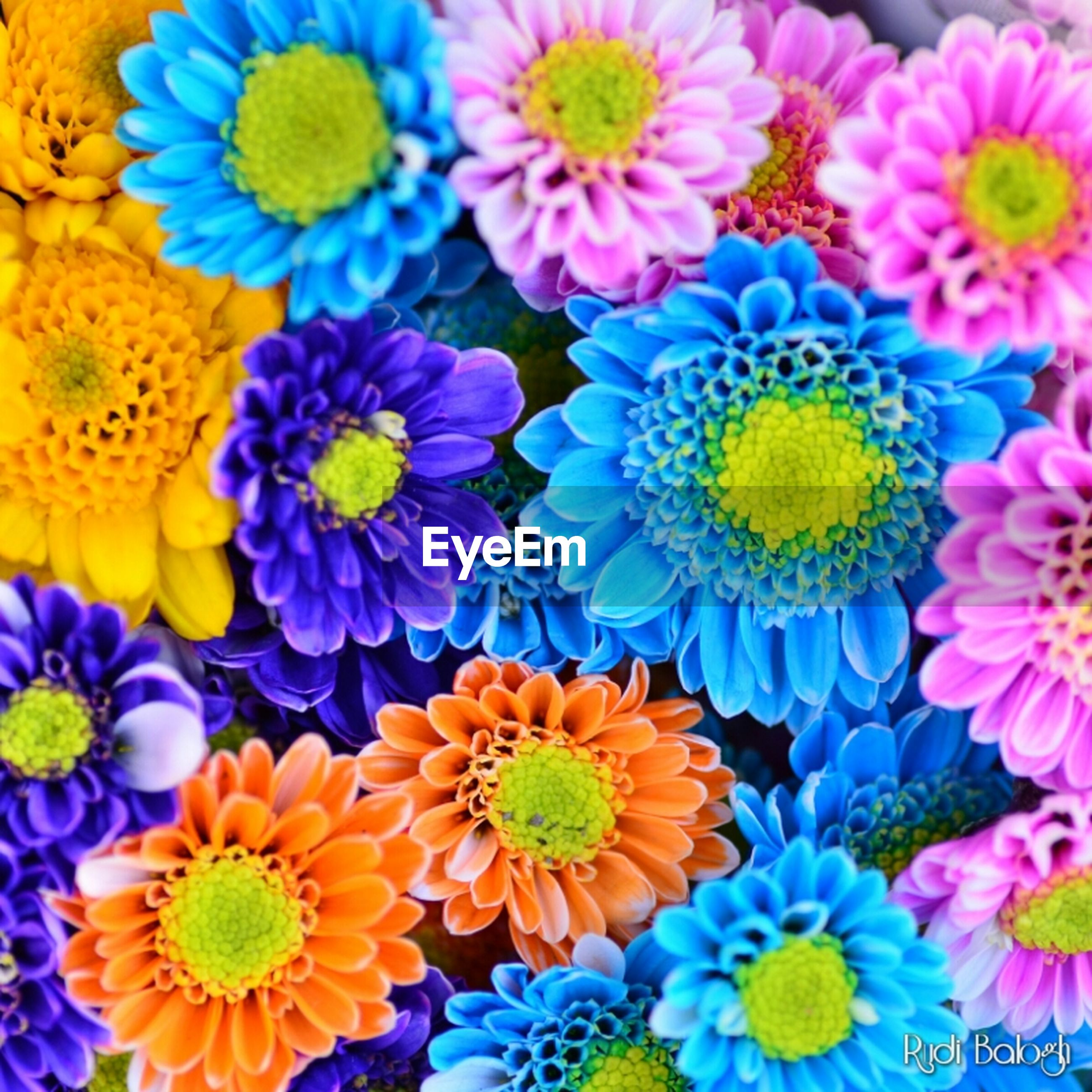 flower, freshness, petal, flower head, fragility, yellow, multi colored, beauty in nature, indoors, high angle view, abundance, blooming, variation, pollen, full frame, daisy, nature, growth, backgrounds, colorful