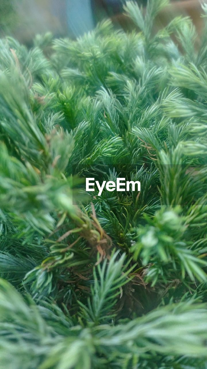 green color, close-up, nature, no people, growth, day, beauty in nature, plant, outdoors, freshness
