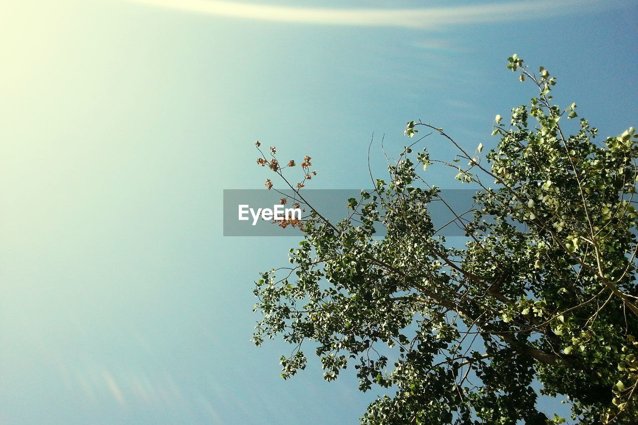 plant, sky, growth, tree, low angle view, beauty in nature, nature, no people, day, tranquility, clear sky, outdoors, branch, sunlight, green color, flower, flowering plant, freshness, leaf, fruit tree