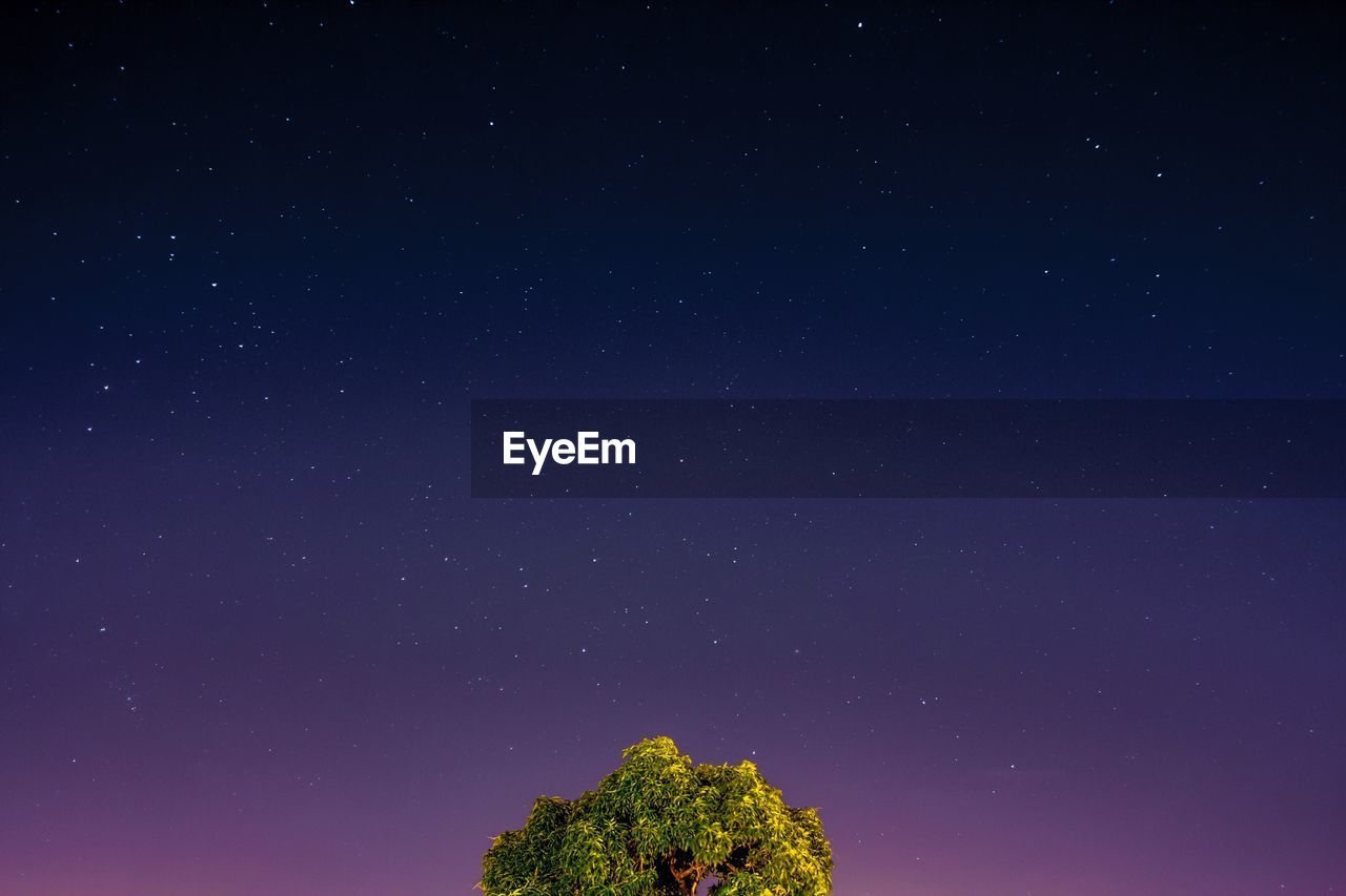 star - space, sky, astronomy, night, space, scenics - nature, beauty in nature, low angle view, nature, no people, plant, tranquility, star, tree, blue, star field, tranquil scene, galaxy, idyllic, outdoors, space and astronomy