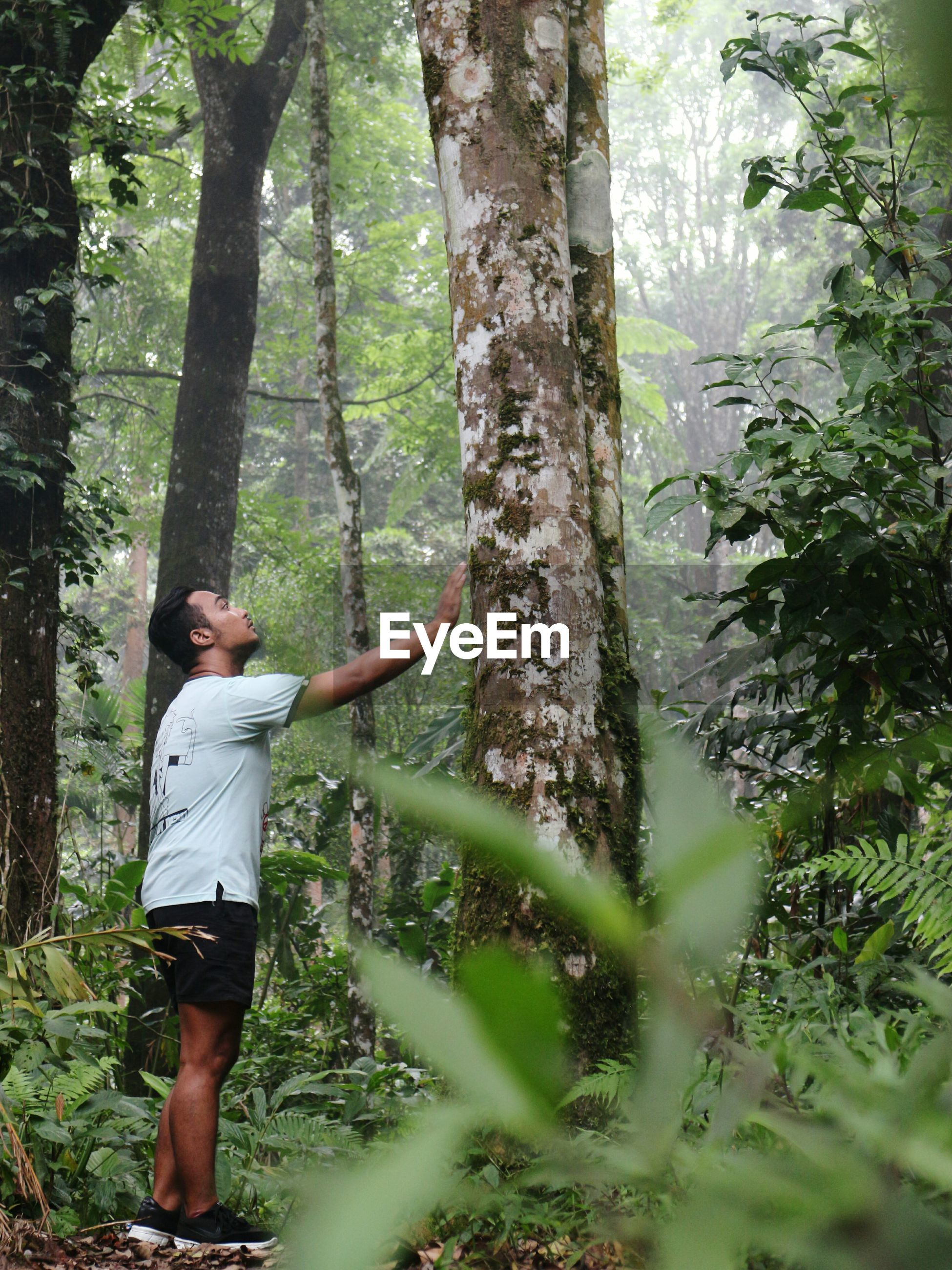 Man touching tree in forest