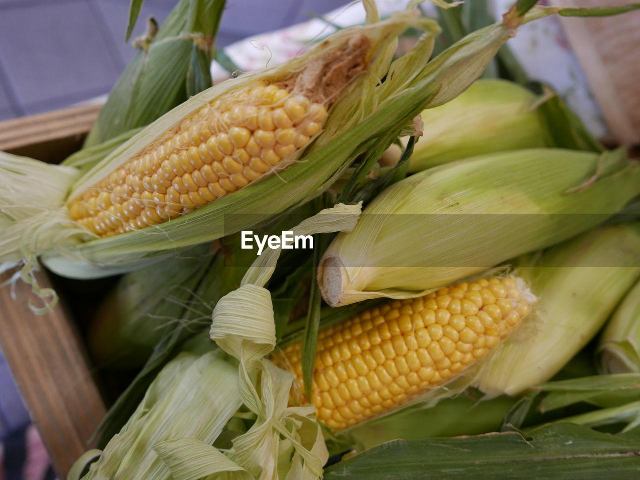 Close-Up Of Corn Cob