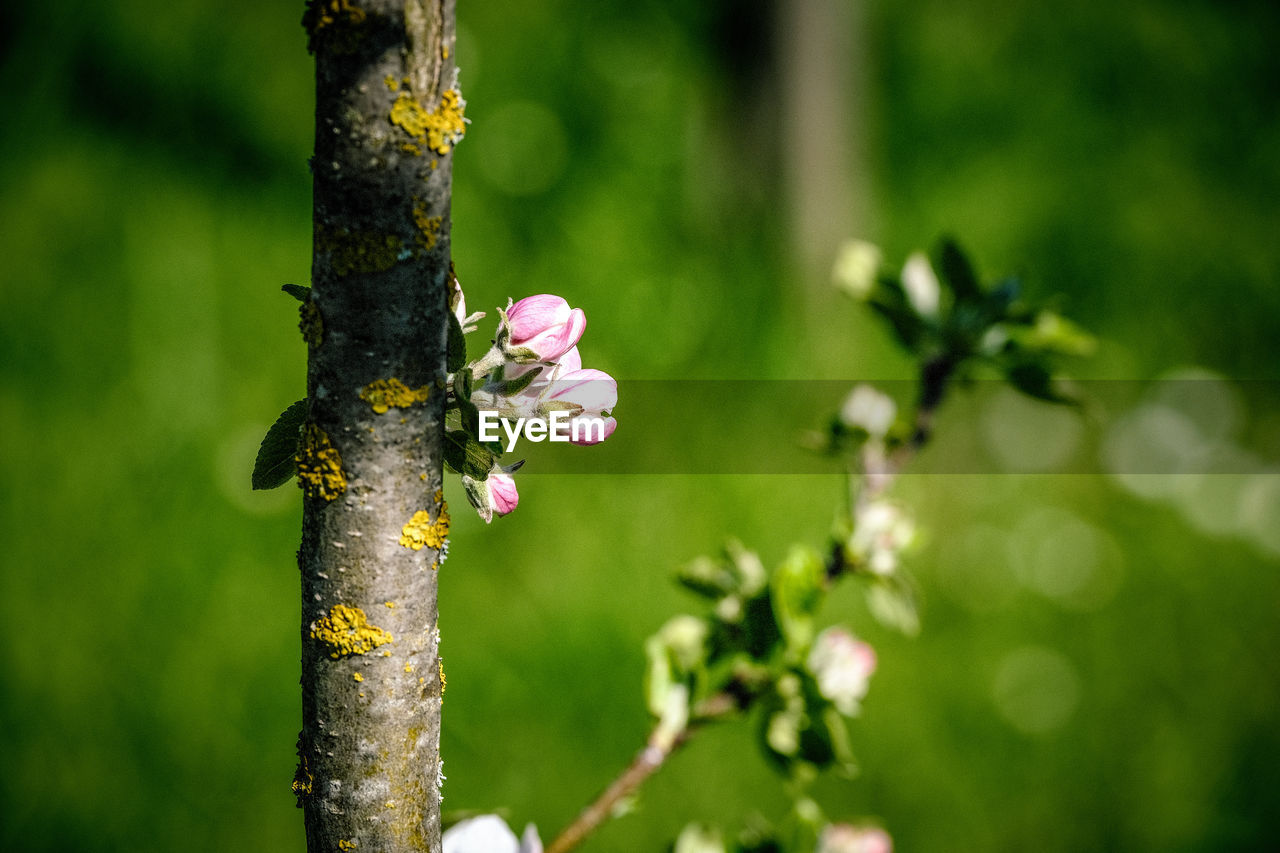plant, growth, flowering plant, flower, focus on foreground, beauty in nature, close-up, nature, tree, fragility, day, vulnerability, no people, freshness, outdoors, tree trunk, green color, trunk, branch, selective focus, flower head