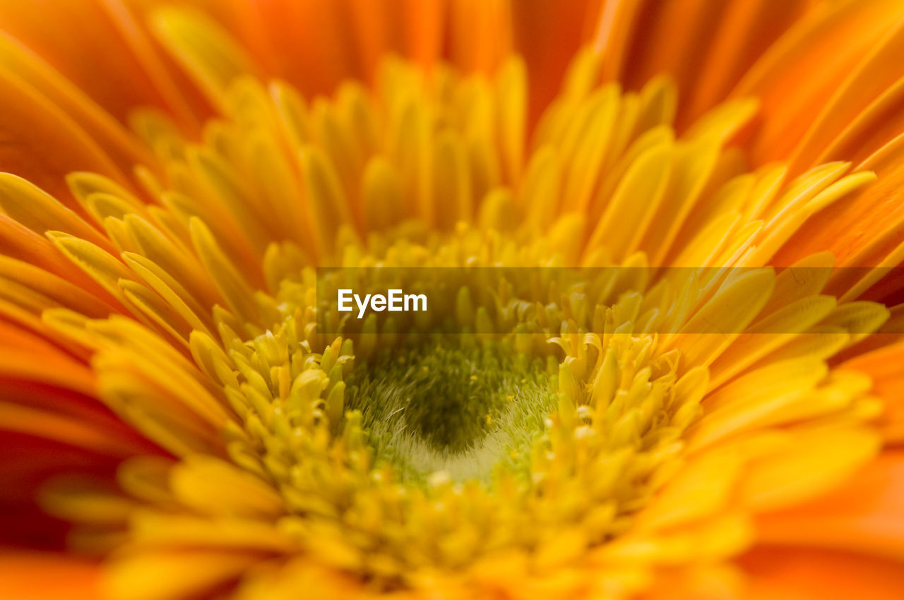 flower, fragility, petal, freshness, flower head, beauty in nature, nature, growth, yellow, close-up, plant, selective focus, pollen, backgrounds, full frame, blooming, no people, sunflower, outdoors, day