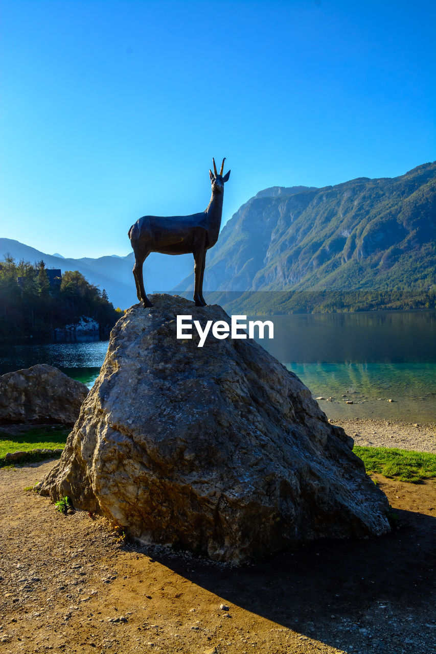 animal, sky, mammal, animal themes, one animal, animal wildlife, nature, clear sky, mountain, water, standing, domestic animals, animals in the wild, deer, rock, solid, day, vertebrate, no people, herbivorous, outdoors