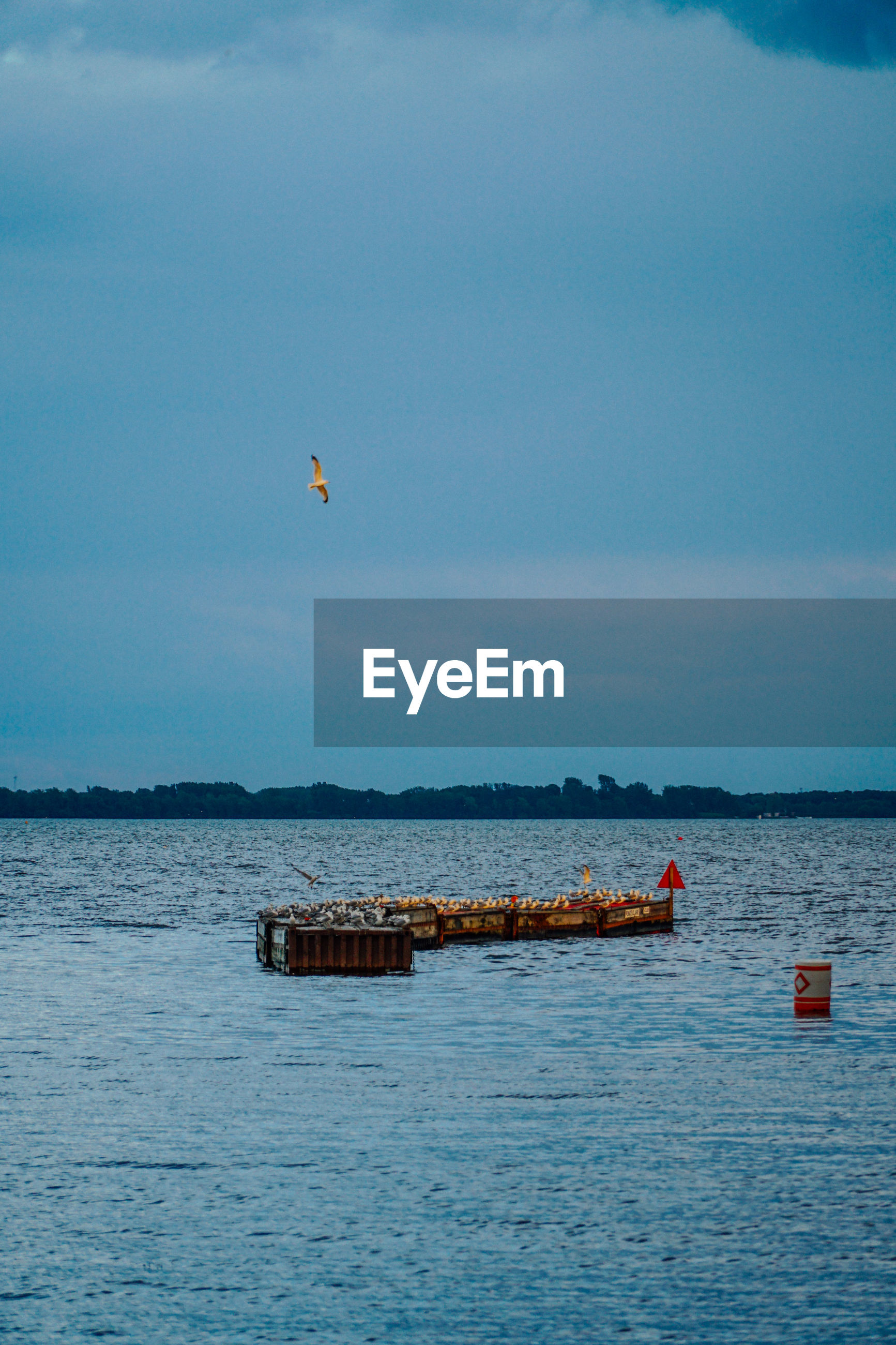 Birds perching on wooden structure in sea against sky
