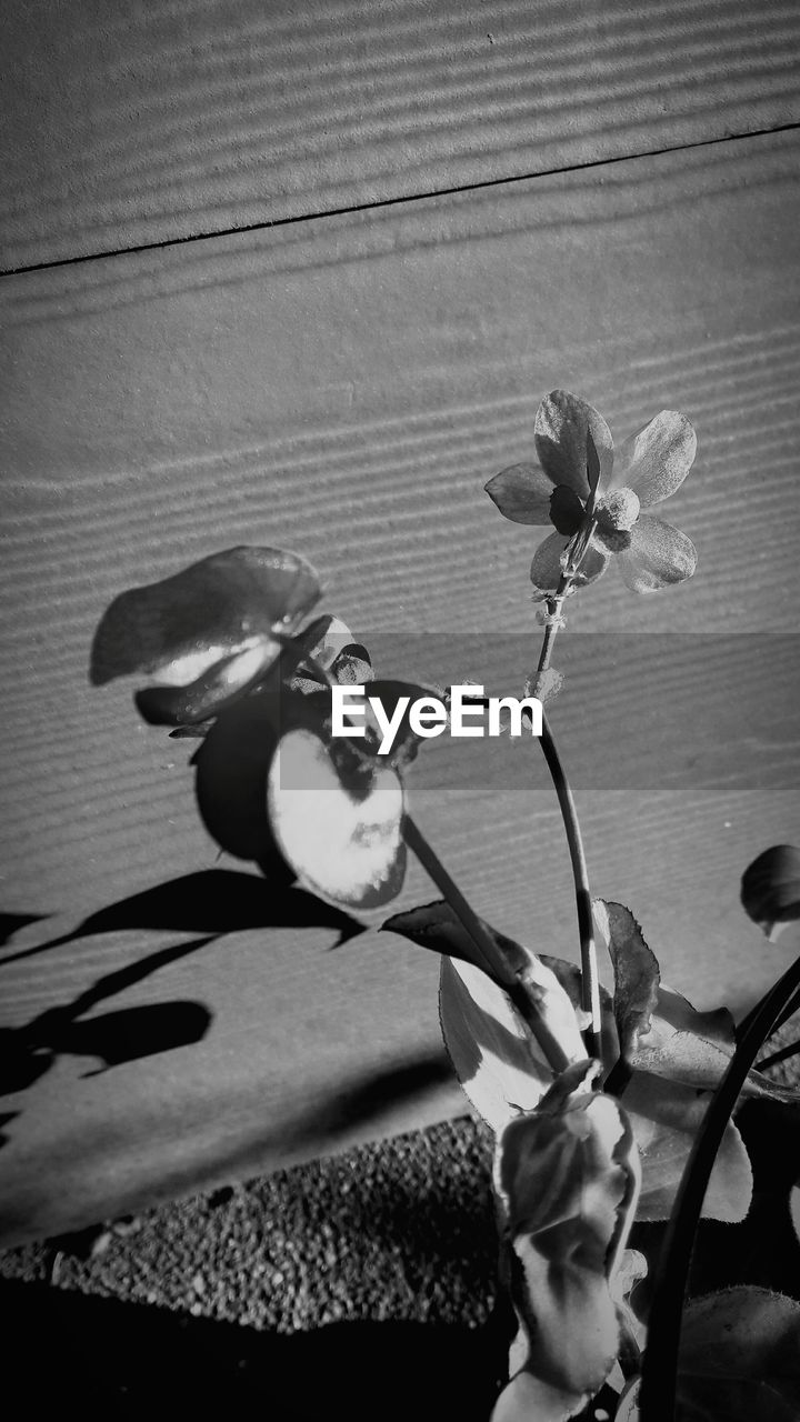 flower, growth, plant, nature, shadow, no people, close-up, outdoors, day