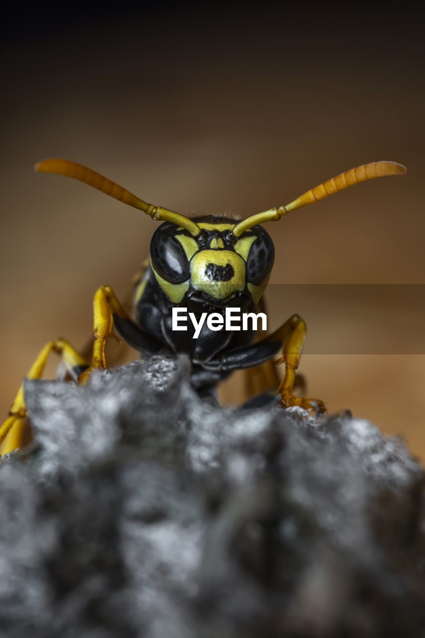 insect, animal themes, invertebrate, animal wildlife, animals in the wild, one animal, animal, close-up, selective focus, no people, nature, solid, day, wasp, animal body part, rock - object, rock, zoology, animal antenna, macro, animal eye