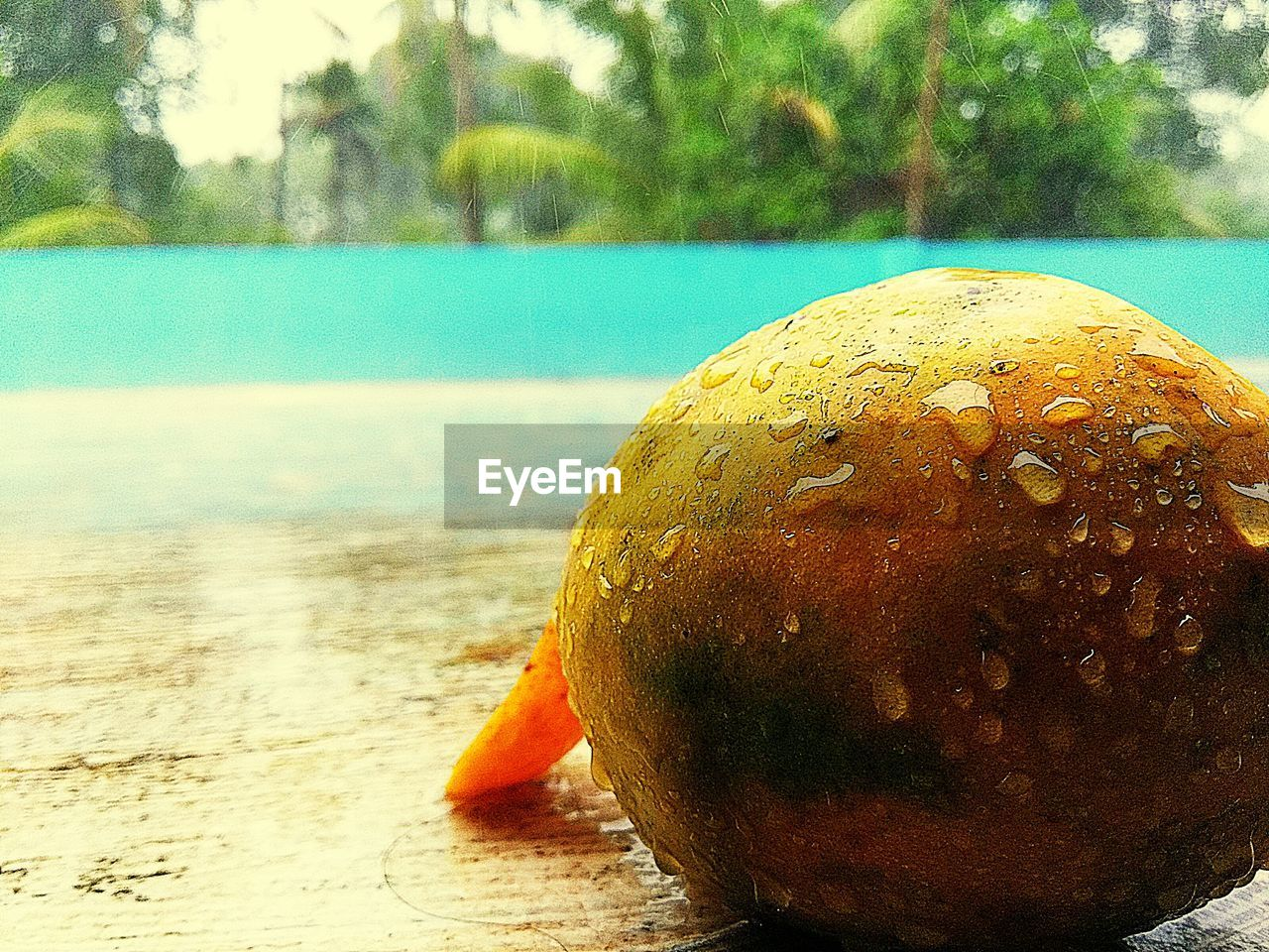 day, focus on foreground, water, no people, outdoors, fruit, close-up, nature, tree, healthy eating, food, beauty in nature, freshness