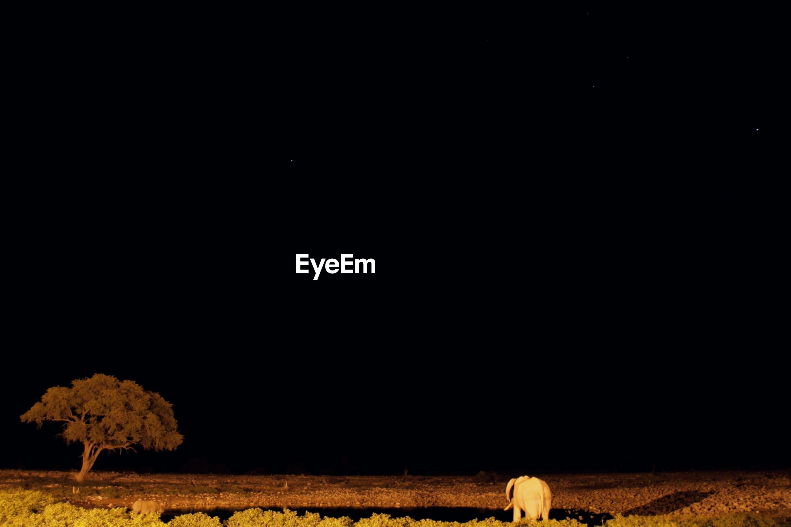 View of an elephant on field at night