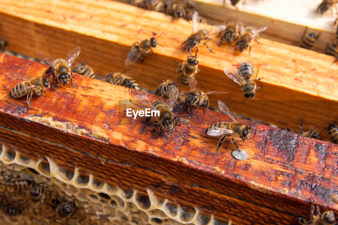 insect, invertebrate, animals in the wild, apiculture, animal themes, bee, animal wildlife, beehive, animal, group of animals, honey bee, wood - material, large group of animals, close-up, honeycomb, beauty in nature, day, nature, no people, zoology