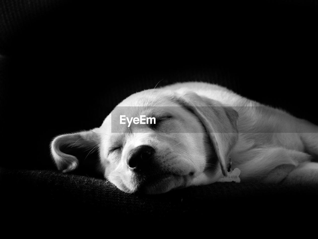 CLOSE-UP OF A DOG SLEEPING ON CARPET