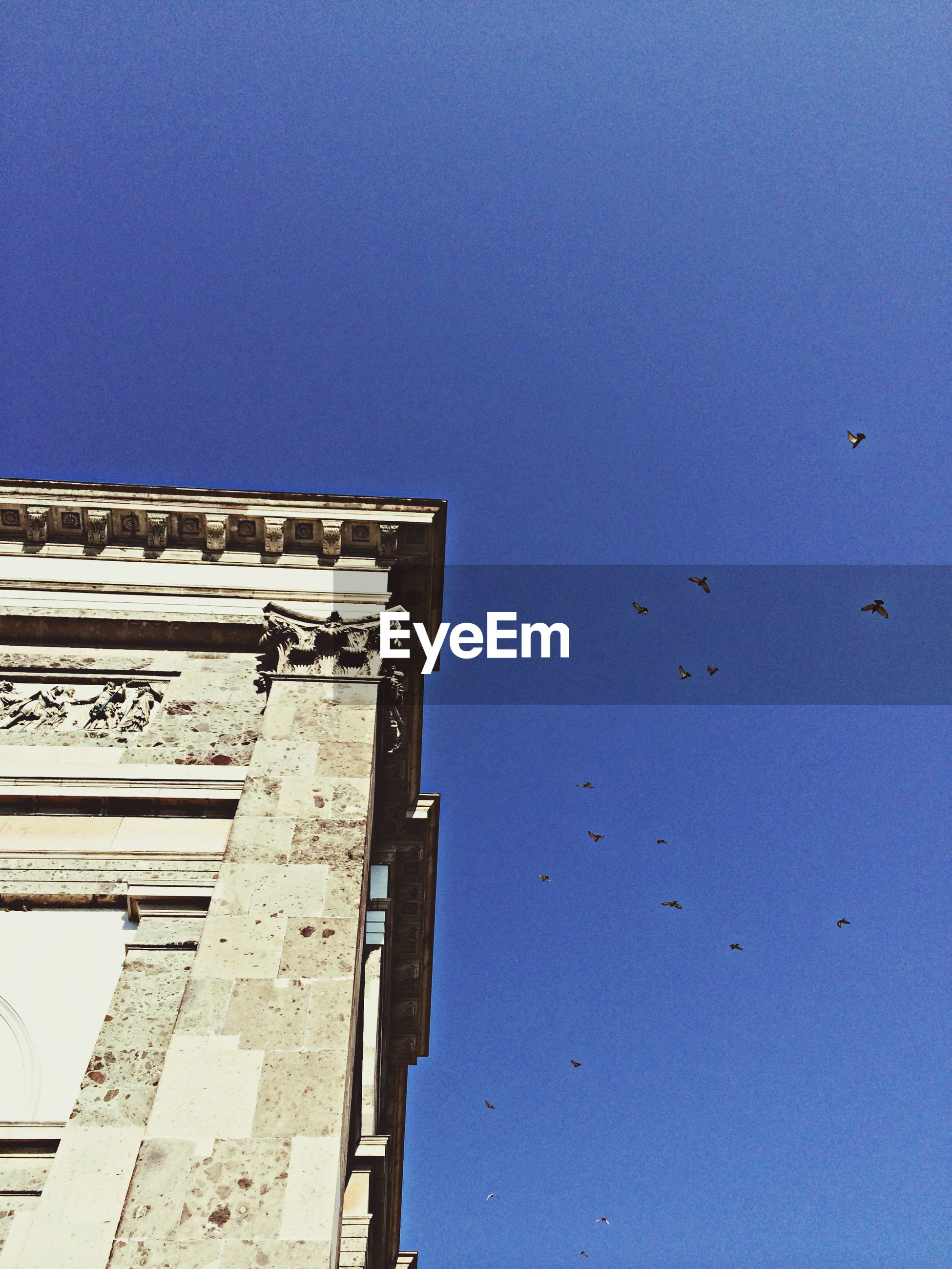 low angle view, architecture, built structure, bird, building exterior, clear sky, blue, flying, copy space, animal themes, animals in the wild, wildlife, building, sky, high section, day, outdoors, flock of birds, no people