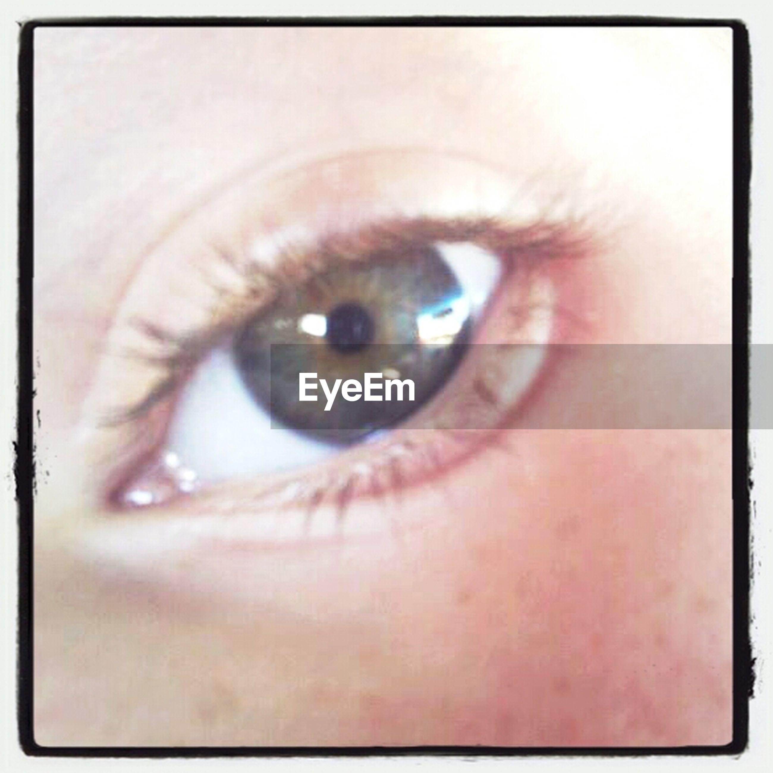 human eye, eyelash, close-up, eyesight, portrait, looking at camera, sensory perception, part of, human skin, human face, extreme close-up, eyeball, iris - eye, eyebrow, extreme close up, indoors, headshot