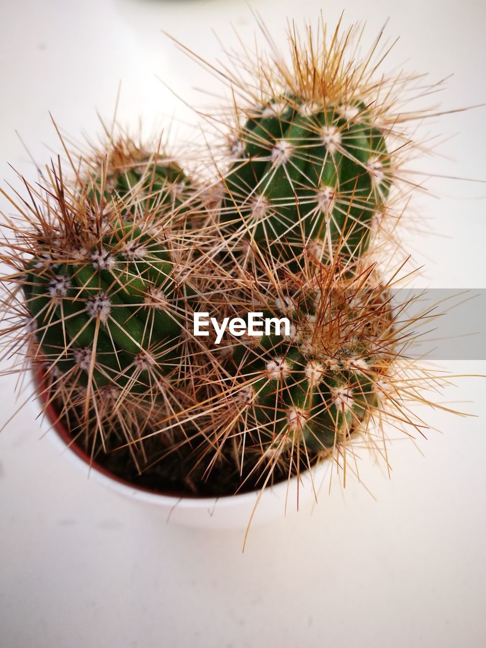 cactus, thorn, spiked, growth, nature, plant, danger, close-up, no people, focus on foreground, risk, beauty in nature, day, outdoors