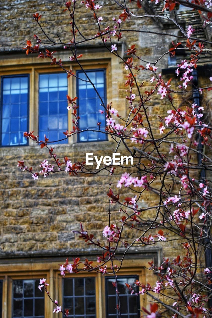 building exterior, built structure, architecture, plant, building, flower, flowering plant, growth, tree, branch, fragility, low angle view, window, day, nature, no people, beauty in nature, vulnerability, freshness, blossom, outdoors, springtime, cherry blossom, cherry tree