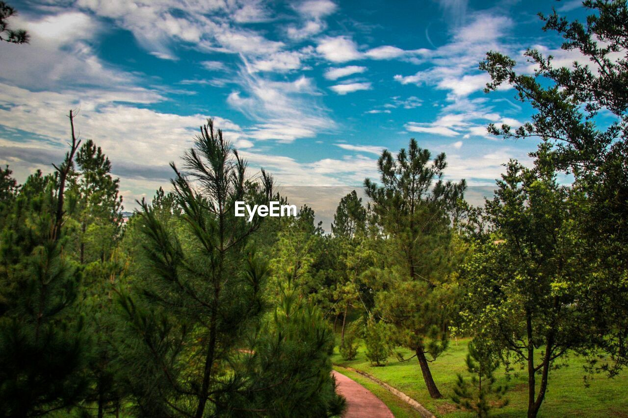tree, plant, sky, growth, cloud - sky, beauty in nature, nature, tranquility, no people, tranquil scene, forest, green color, direction, non-urban scene, day, scenics - nature, outdoors, land, environment, landscape