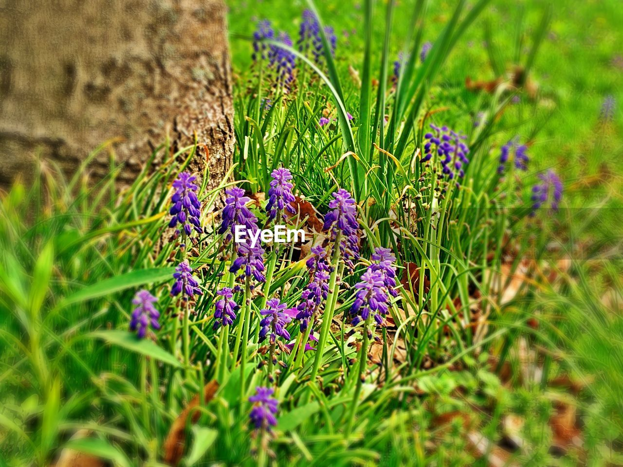 flowering plant, plant, flower, growth, beauty in nature, vulnerability, fragility, freshness, green color, purple, selective focus, nature, no people, field, day, land, close-up, petal, grass, flower head