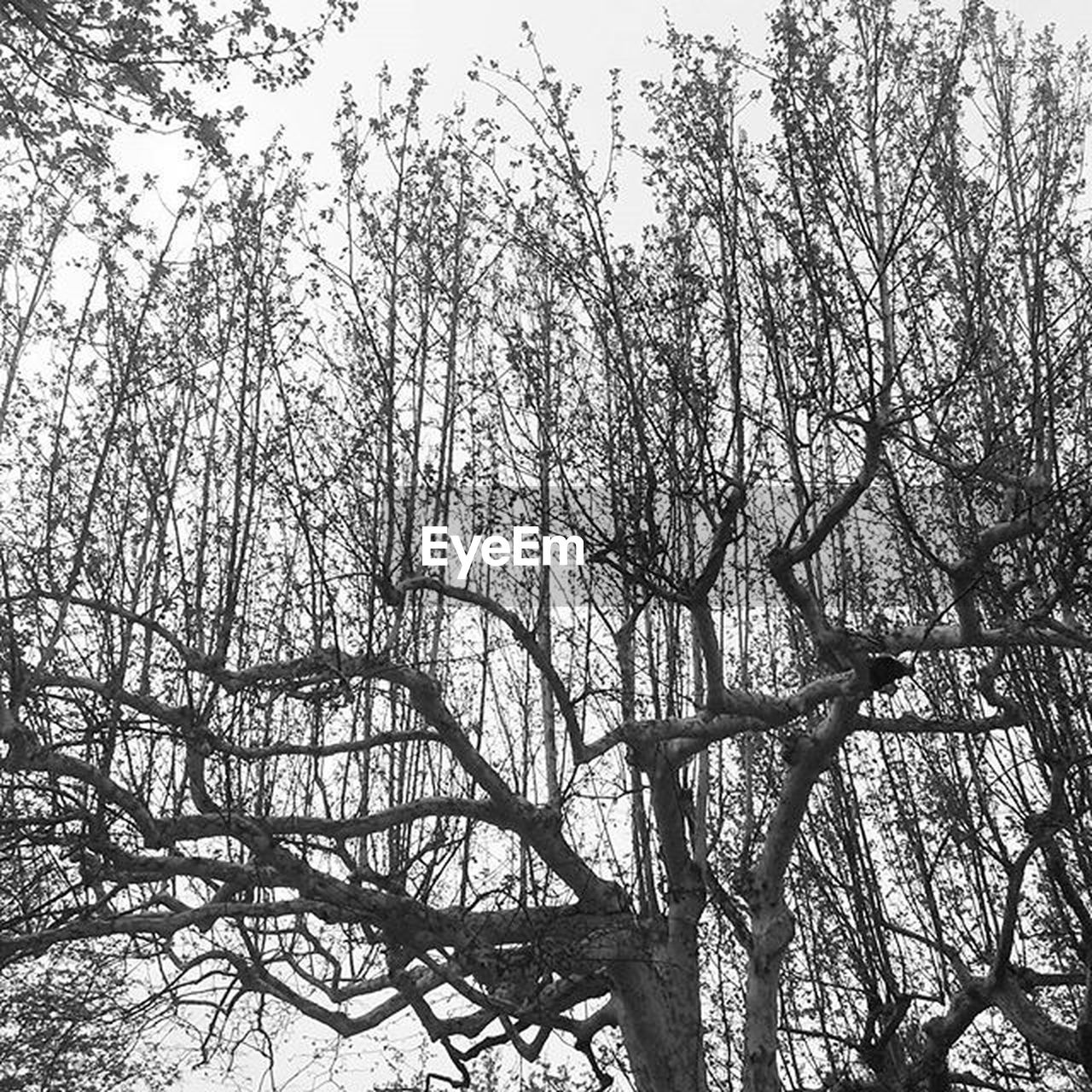 tree, low angle view, nature, branch, day, outdoors, no people, tranquility, forest, beauty in nature, growth, sky