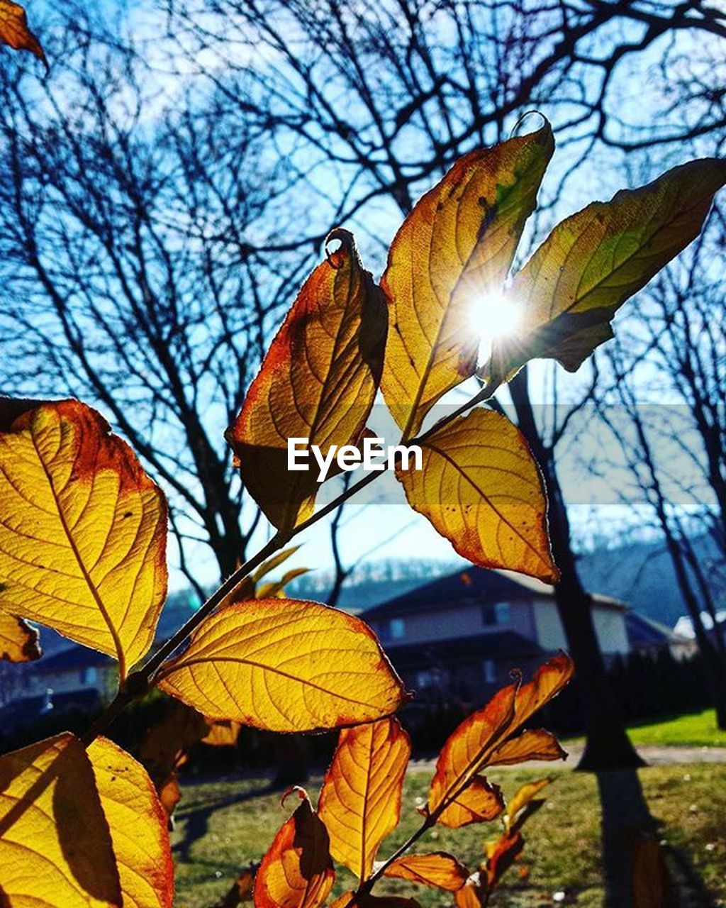 leaf, plant part, autumn, plant, tree, nature, no people, change, sunlight, close-up, yellow, day, beauty in nature, sky, focus on foreground, branch, low angle view, growth, outdoors, leaves, natural condition