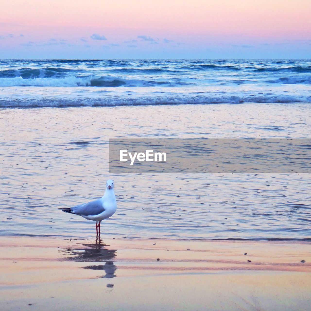 water, bird, sea, nature, one animal, animals in the wild, animal themes, sunset, beach, beauty in nature, shore, horizon over water, animal wildlife, scenics, no people, tranquility, tranquil scene, outdoors, sand, day, sky