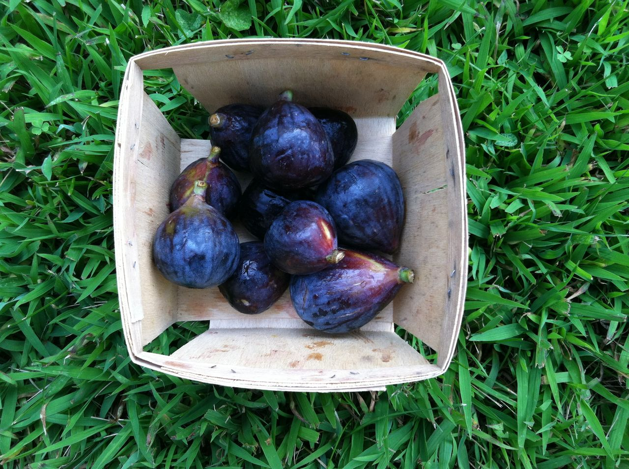 Directly above shot of figs in container on field