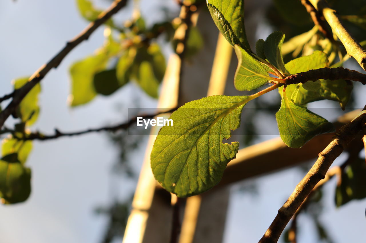 plant, plant part, leaf, growth, focus on foreground, close-up, tree, beauty in nature, branch, nature, green color, no people, day, selective focus, twig, outdoors, vulnerability, tranquility, fragility, freshness, leaves