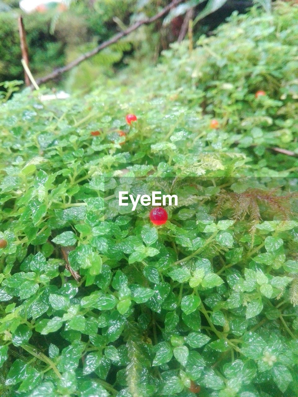green color, growth, no people, red, plant, nature, high angle view, outdoors, day, beauty in nature, close-up, freshness, fragility, animal themes
