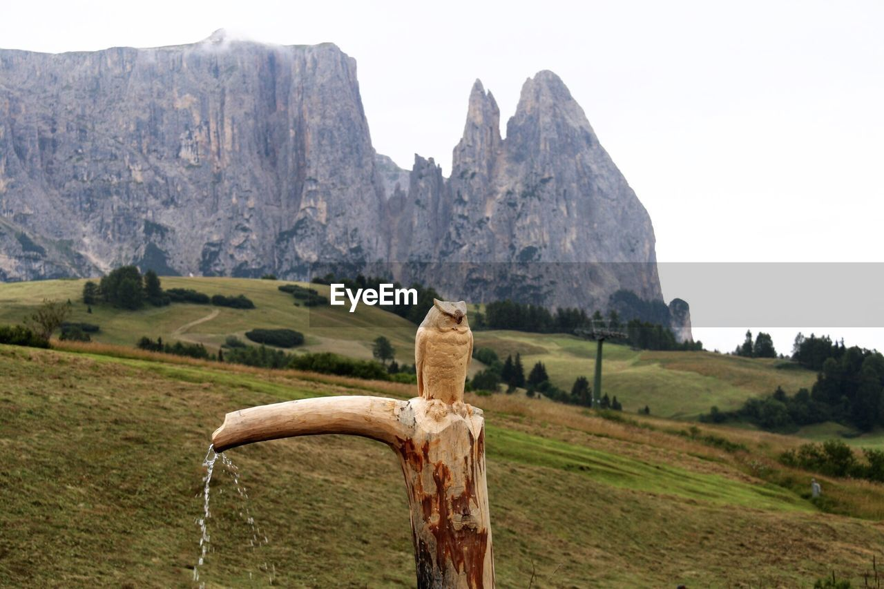 Wooden sculpture of owl on log