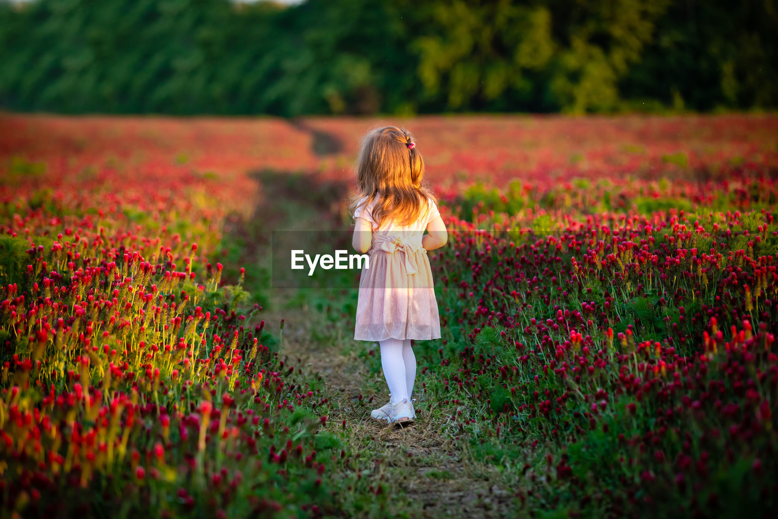 Girl standing amidst pink flowers on field