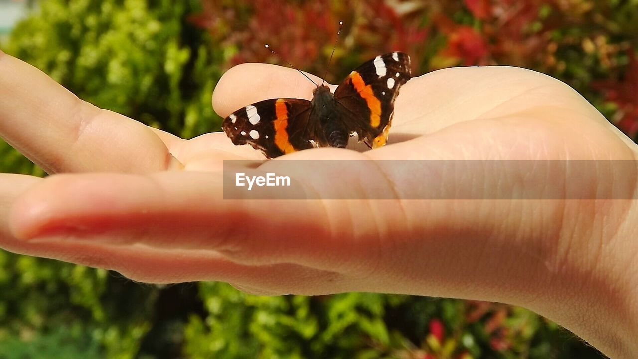 Close-up of person hand holding butterfly