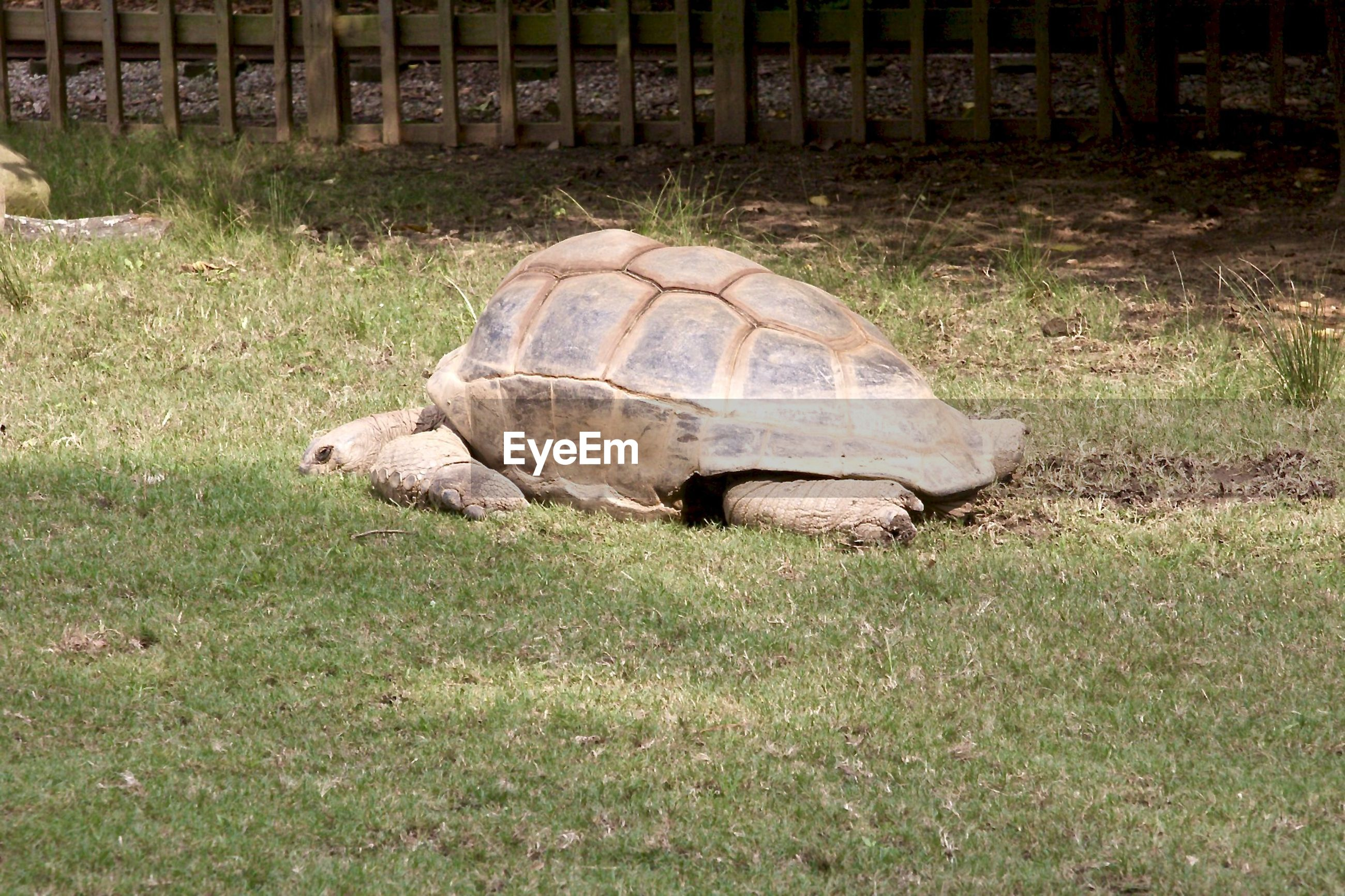 Turtle at zoo