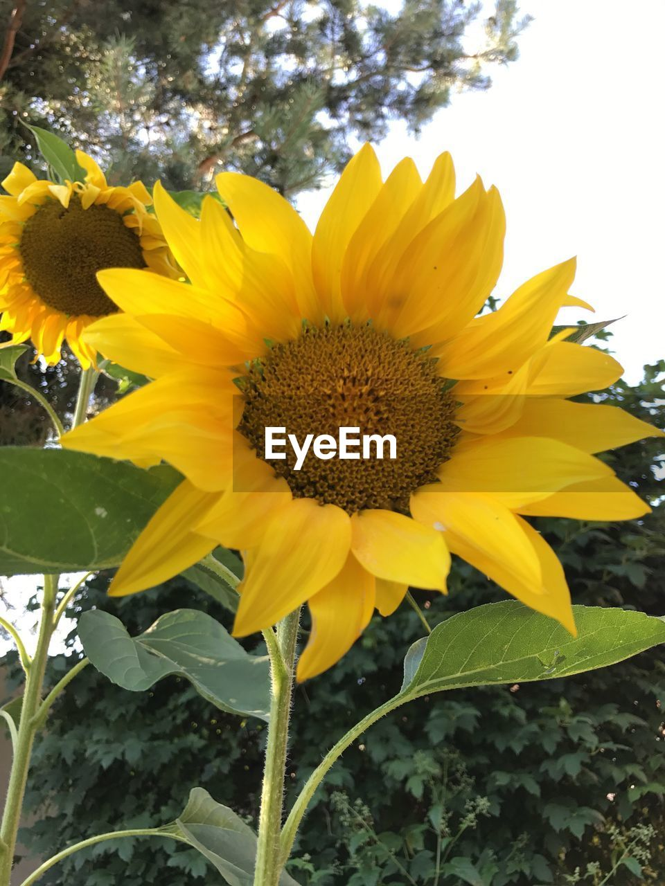 yellow, flower, petal, fragility, beauty in nature, nature, growth, flower head, freshness, plant, outdoors, no people, leaf, day, close-up, sunflower, blooming