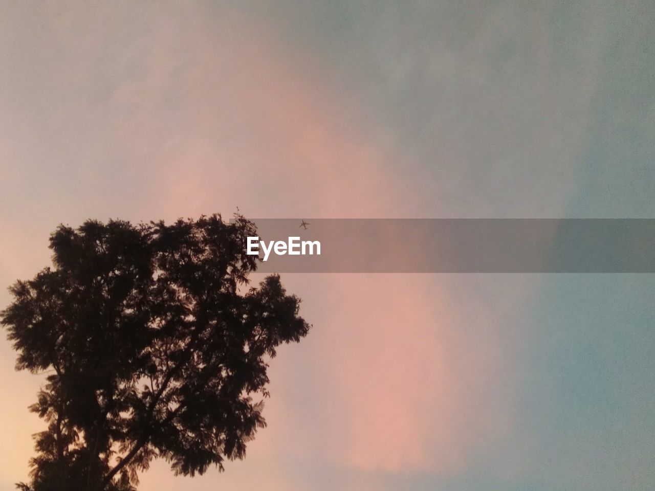 sky, tree, sunset, plant, beauty in nature, silhouette, tranquility, nature, no people, scenics - nature, cloud - sky, tranquil scene, low angle view, orange color, growth, outdoors, idyllic, rainbow, dusk, coniferous tree