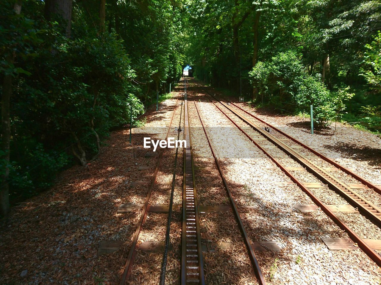 railroad track, rail transportation, tree, transportation, the way forward, public transportation, growth, nature, day, real people, outdoors, one person, people